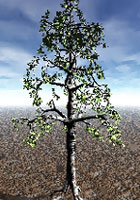 Lab Tree - creating a birch